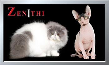 zenithi.com