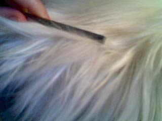 comb persian fur