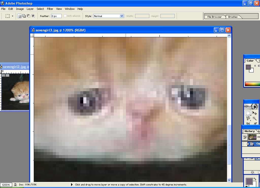 copper eye cat