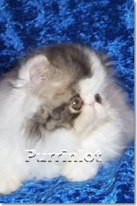 6 week old kitten