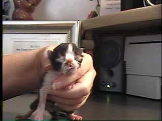 Purrinlot Kitten Blog 30 Days In A Persian Breeders