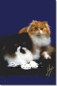 Beautiful Pictures of Persian cats