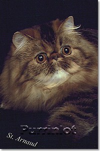 cat pictures- pictures of cats