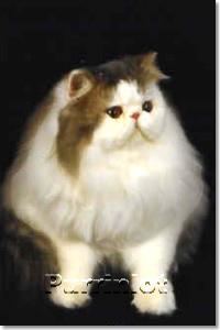 cat pictures- Purrinlot Hercules