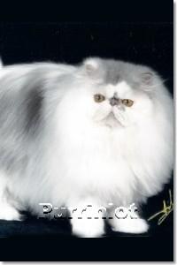 Nanc-c Double Zeus of Purrinlot - cat pictures