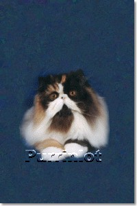 Persian Cat Grand Champion Patcher